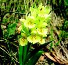 Orhideje – kraljice cvijeća