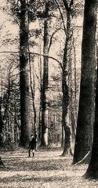 Dvjesto pedeset godina hrvatskog šumarstva
