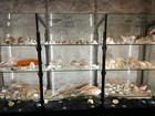 Obnovljena malakološka zbirka u Makarskoj